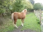 Horse Stock 123