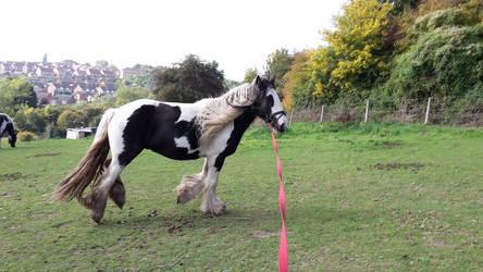 Horse Stock 253