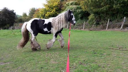 Horse Stock 254