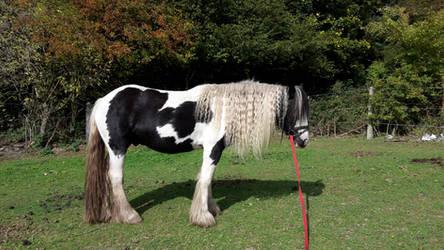 Horse Stock 256