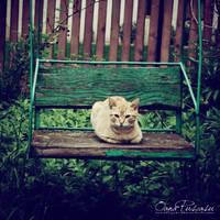 Za Cat by OanaRayne