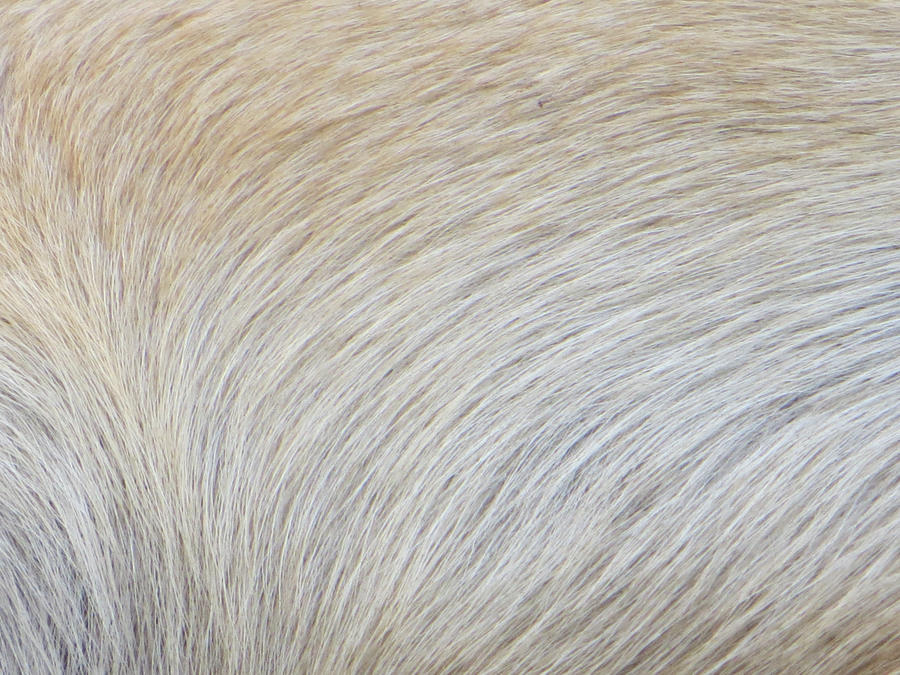 how to draw dog fur texture