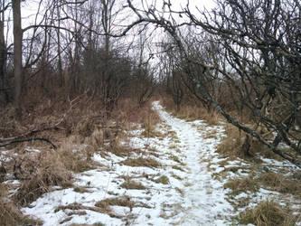 Snowy Path by PtarmiganMan
