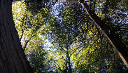 Look up at the trees by PtarmiganMan