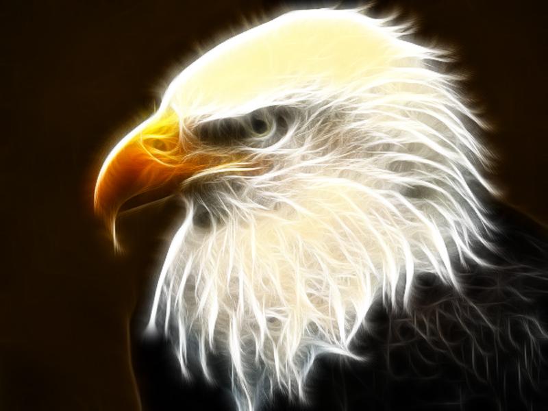 American Bald Eagle by CmdrChaos on DeviantArt