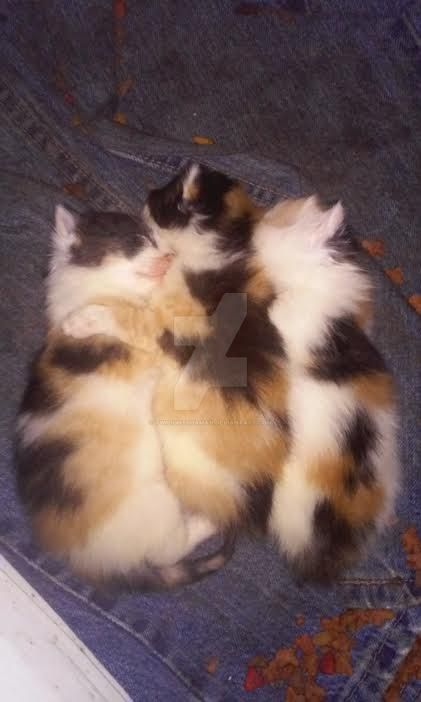 Sleeping Kittens by TwilightShaman