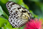 Butterfly 10 by horus40