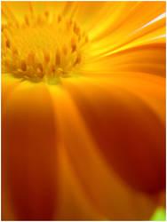 Fibonacci 1 by FargoLevy