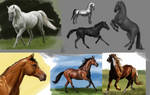 Horses study 1