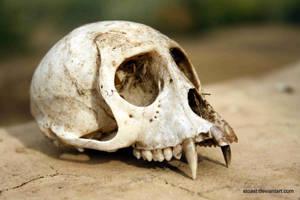 Dead Monkey's Skull by SToast