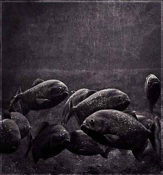 Piranhas by daaram