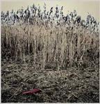 Plastic fields by daaram