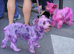 Pink Doggies