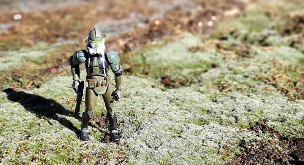 Gree Among Moss