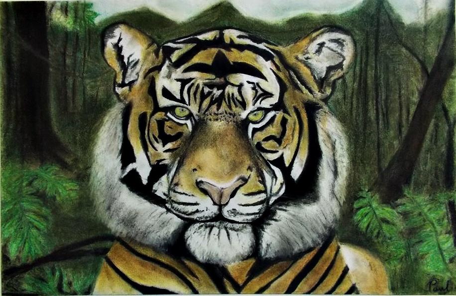 Panthera tigris sumatrae by musicx09