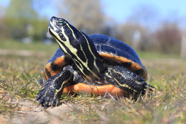turtle look by caty132
