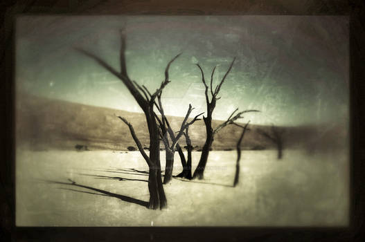 Withered Trees