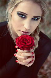 red rose. by Violetessa