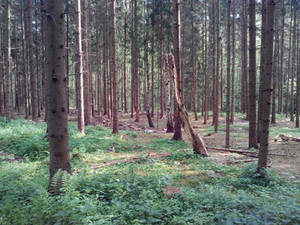 Eibia - The nature around the bunker