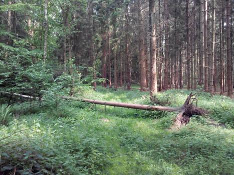 Eibia - More nature around this place