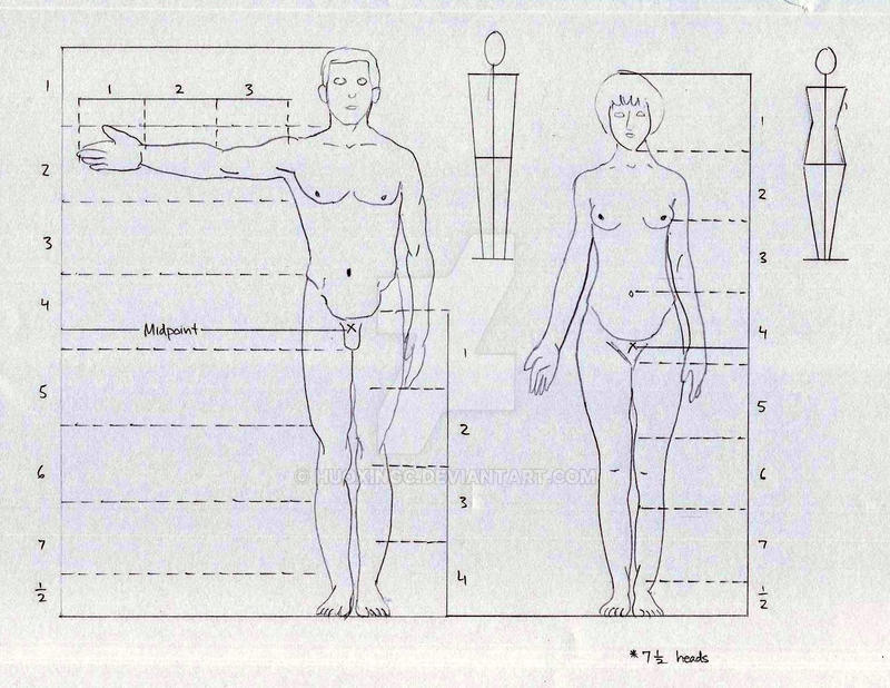 Human Body Proportion by HuoXingC
