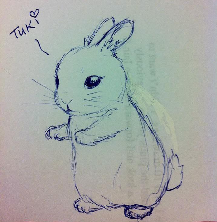 random rabbit =:B by TixieLix