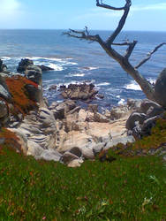 Pebble Beach by Phone