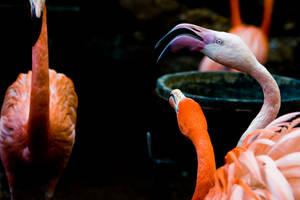 Flamingo 04 by btoum