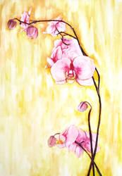 Orchid by JenniElfi