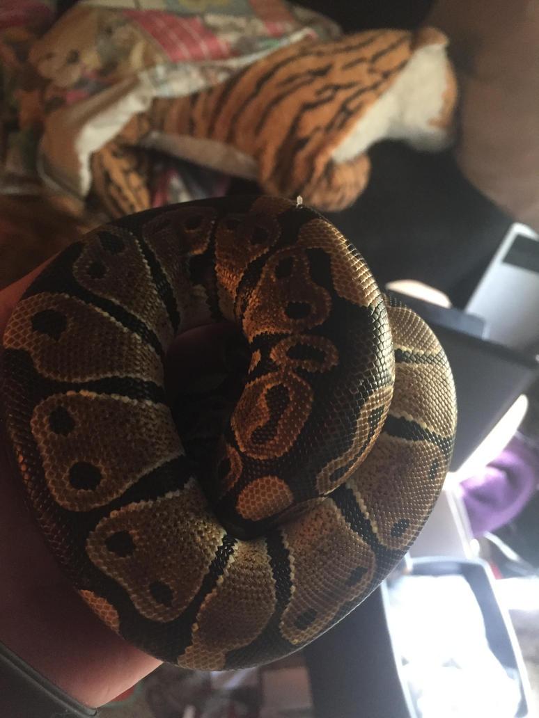 My new baby by goddessofdragon