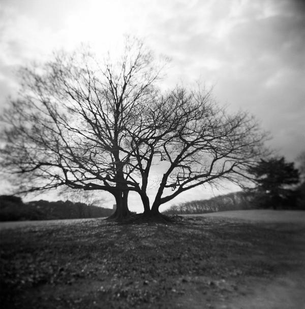 a tree by djhiroshi