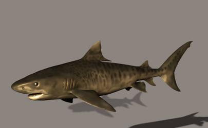 3DS Max Tiger Shark 1
