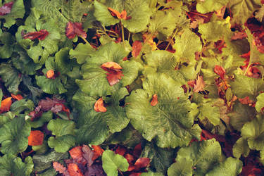 Leaves by CananStock