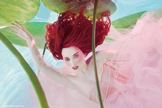Water Lily - The Imaginarium Underwater