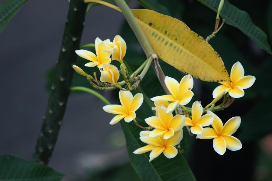 Hana Flower Bunga Hua By 9rayangel On Deviantart
