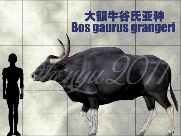 http://orig09.deviantart.net/5f52/f/2011/161/9/2/bos_gaurus_grangeri_by_sinammonite-d2b3ivx.jpg