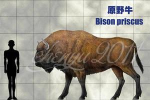 Bison priscus by sinammonite