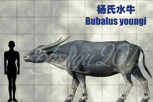 Bubalus youngi by sinammonite