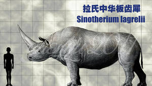 Sinotherium lagrelii by sinammonite