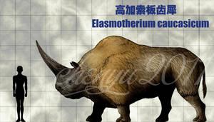 Elasmotherium caucasicum