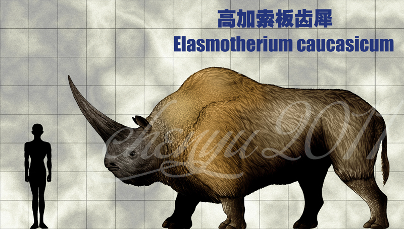 Elasmotherium caucasicum by sinammonite
