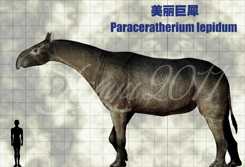 豹狮兽vs老虎几千万年前犀牛像猪又像马?犀牛的演化故事:征服与被征服巨犀牛