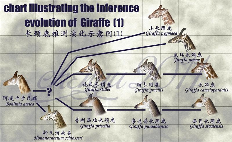 I Am Giraffe Evolutions inference evolution of...