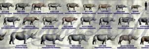 Rhinocerotidae of China
