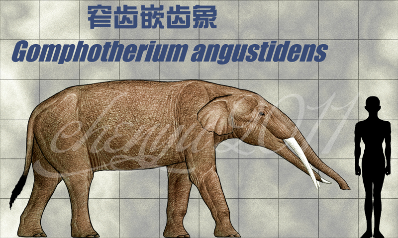 Gomphotherium Gomphotherium angustidens by