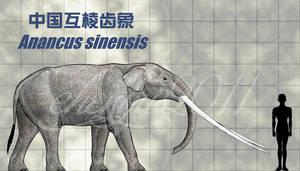 Anancus sinensis