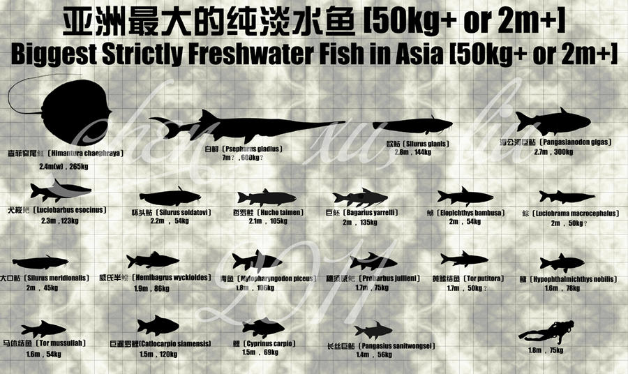 Big fish season 8 by sinammonite on deviantart for How to season fish