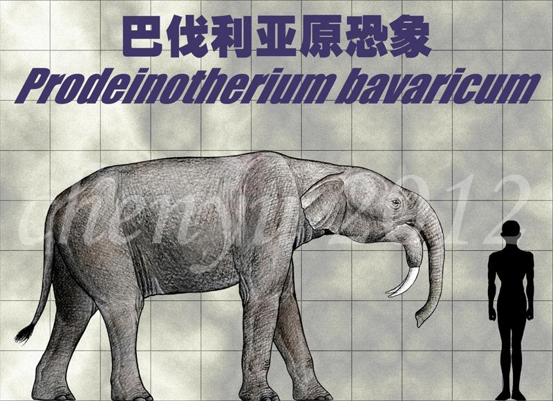 Prodeinotherium bavaricum by sinammonite on DeviantArt