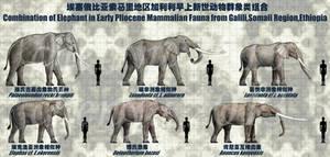 Combination of Elephant 1