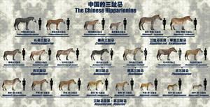 The Chinese Hipparionine